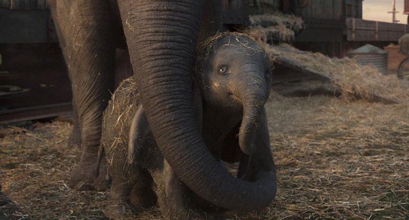 Estrenos: El clásico de Disney, Dumbo, el gran protagonista de la cartelera