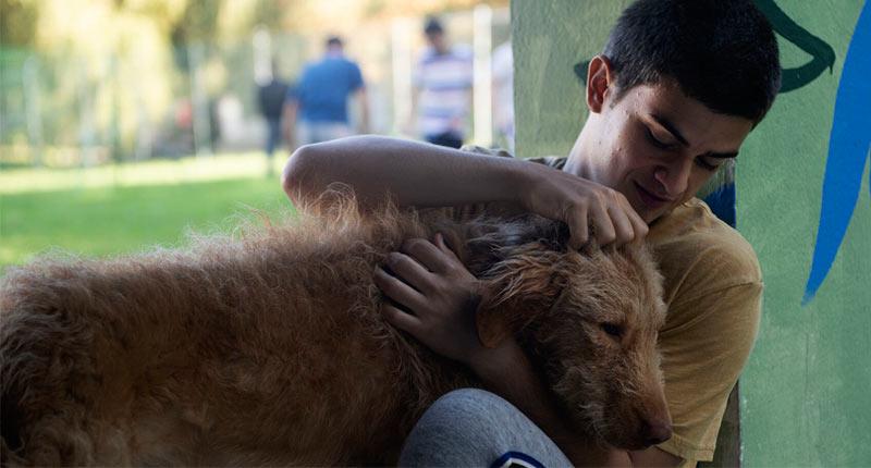 Diecisiete, el efecto terapéutico de los animales