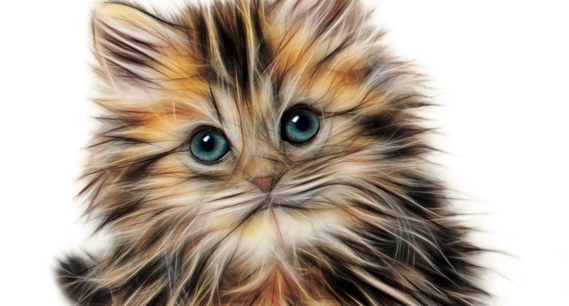 Relatos de gatos (Varios autores, 2018)
