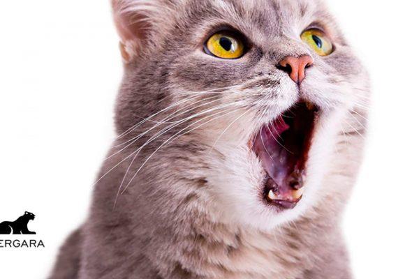 Test de personalidad para gatos (Dra. Lauren Finka, 2020)